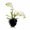 Eva Solo Orchid