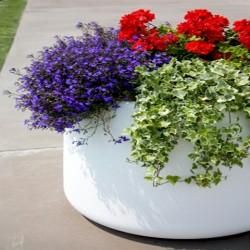 Magis Flower Pot Tubby