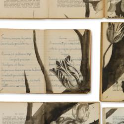 NLXL Eka 02 Biblioteca Wallpaper by Ekaterina Panikanova