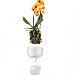 Eva Solo Self Watering Orchid Pot Glass