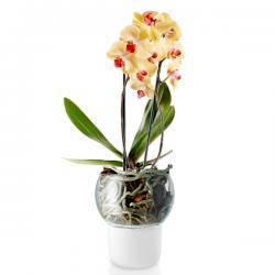 Eva Solo Self Watering Orchid Pot Glass