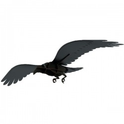 Ibride Adam Raven
